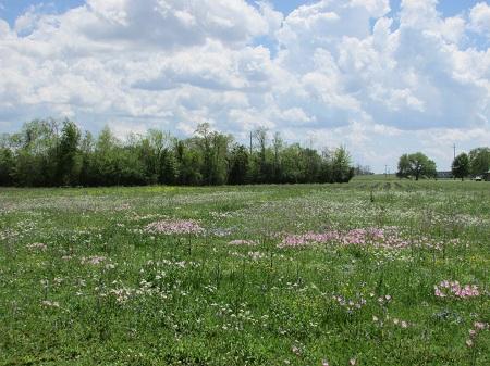 Iberia Parish Spring