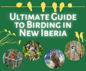 Ultimate Guide to Birding in New Iberia, Louisiana