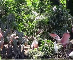 Embedded thumbnail for Rip's Rookery at Jefferson Island Rip Van Winkle Gardens, New Iberia, Louisiana