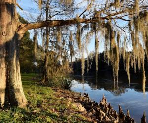 Embedded thumbnail for Bayou Teche Scenic Byway